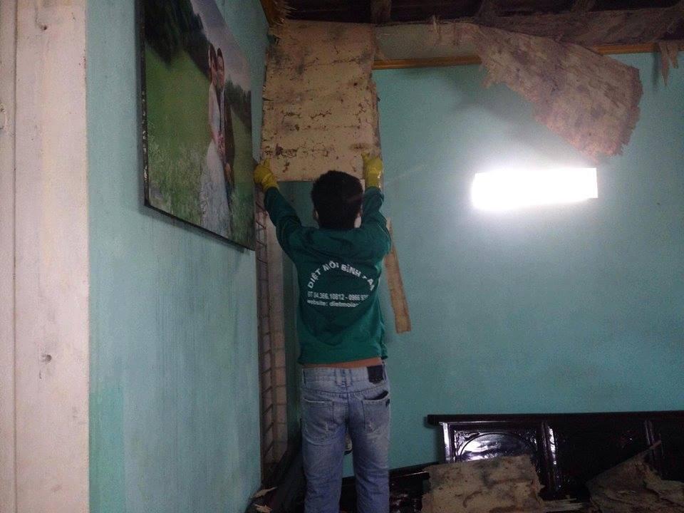 Dịch vụ diệt mối tận gốc tại quận Thanh Xuân – Hà Nội