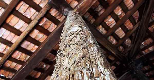 Tại sao nhà gỗ cổ dễ bị mối xông ? 1
